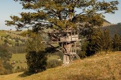 Casa na árvore pequena Imagem de Stock Royalty Free