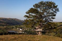 Casa na árvore pequena Foto de Stock Royalty Free