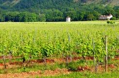 Casa na jarda da videira, ao sul de França Imagens de Stock Royalty Free