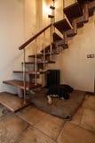 Casa nebulosa - cão sob escadas fotografia de stock royalty free