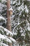 Casa nevado do pássaro em um pinheiro Aviário de madeira da madeira Caixa-ninha na floresta, Fotos de Stock Royalty Free