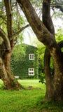 Casa no campo com a parede da planta de Coatbuttons entre o natu verde Fotos de Stock Royalty Free