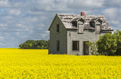 Casa no campo do Canola Foto de Stock Royalty Free
