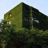 Casa overgrown Foto de archivo libre de regalías