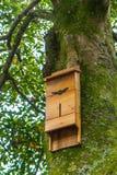 Casa para bastões em uma árvore foto de stock