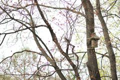 Casa para los pájaros Fotos de archivo