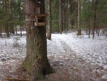 Casa para os pássaros na árvore Fotografia de Stock Royalty Free