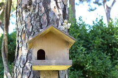 Casa para um esquilo em uma árvore Fotografia de Stock Royalty Free