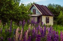 A casa pequena coberto de vegetação velha com flores fotografia de stock