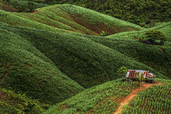 Casa pequena na exploração agrícola imagens de stock royalty free