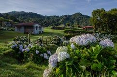 A casa pequena na pradaria com flores Fotografia de Stock