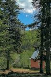 Casa pequena nas madeiras sob os pinhos altos Foto de Stock Royalty Free
