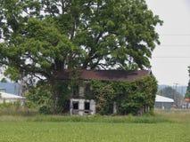 Casa perdida nas árvores imagem de stock