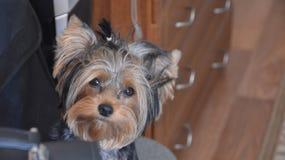 casa piacevole un cane Fotografia Stock Libera da Diritti