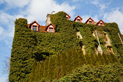 Casa Overgrown foto de stock royalty free