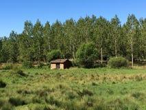 Casa próximo à floresta Fotografia de Stock Royalty Free
