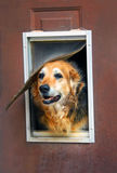 Casa que necesita reparaciones Fotografía de archivo libre de regalías