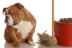 Casa que rompe un perro Fotografía de archivo libre de regalías