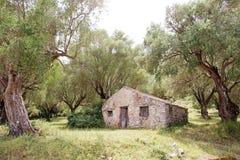 Casa rural entre las aceitunas en Italia Imagenes de archivo