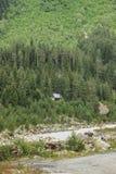 Casa rustica di legno nascosta fra l'abetaia densa e un fiume fotografia stock libera da diritti