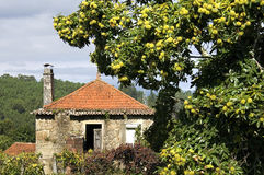 Casa sem-vida e árvore de castanha vibrante, Portugal Fotos de Stock Royalty Free