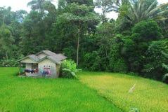 Casa semplice in mezzo alla risaia Immagini Stock