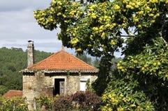 Casa sin vida y árbol de castaña vibrante, Portugal Fotos de archivo libres de regalías