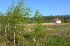 Casa sola en el campo de la primavera en el fondo del bosque del abedul Imagen de archivo
