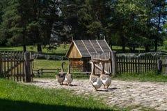 Casa storica polacca del villaggio Immagine Stock
