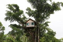 Casa sull'albero nella giungla nel Vanuatu Fotografie Stock