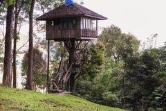 Casa sull'albero tropicale in foresta Immagine Stock