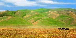 Casa sulla gamma, sui cieli blu che billowing le nuvole, su Rolling Hills verde fertile e sui campi dorati per pascere sopra fotografie stock