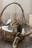 Casa sveglia allegra del gatto a strisce grigio Fotografia Stock Libera da Diritti