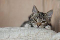 Casa sveglia allegra del gatto a strisce grigio Fotografia Stock