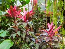 Casa tailandesa en un jardín tropical Fotos de archivo libres de regalías