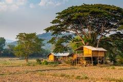 Casa tailandesa típica del estilo rodeada por el campo agrícola construido debajo de árbol grande fotos de archivo
