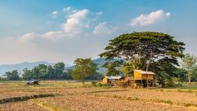 Casa tailandesa t?pica del estilo rodeada por el campo agr?cola construido debajo de ?rbol grande imagenes de archivo