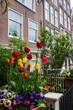 Casa tradizionale con il giardino del tulipano Fotografia Stock