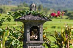 Casa tradizionale di balinese degli alcoolici sul giacimento del riso Fotografia Stock