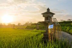 Casa tradizionale di balinese degli alcoolici sul giacimento del riso, Bali Fotografia Stock Libera da Diritti