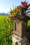 Casa tradizionale di balinese degli alcoolici sul giacimento del riso, Bali Immagine Stock