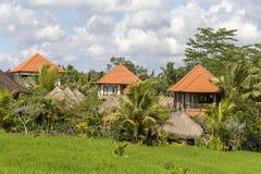 Casa tropicale con un tetto piastrellato fra le risaie Bali, Ubud, Indonesia Immagine Stock
