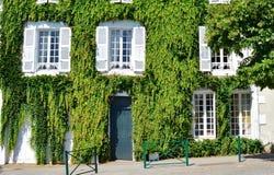 Casa velha branca coberta com as folhas de uvas selvagens Foto de Stock