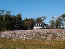 Casa velha da exploração agrícola atrás do campo do algodão em S. Geórgia Imagens de Stock Royalty Free