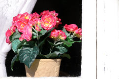 Casa velha do fundo com janelas e flores Fotografia de Stock Royalty Free