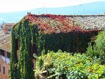 Casa velha em Toscânia, em Itália, em cobertos de vegetação com a hera verde e vermelha grossa imagens de stock
