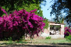 Casa velha entre o buganvilia foto de stock