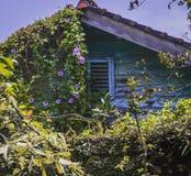 A casa velha no jardim da planta Imagens de Stock