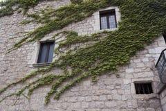Casa velha, retorcida com folhas verdes Fotografia de Stock