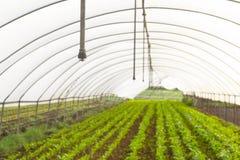 Casa verde con las verduras comestibles foto de archivo